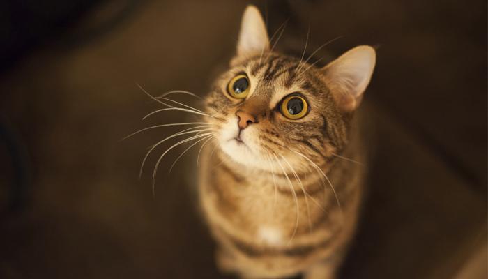potere -curativo-dei-gatti