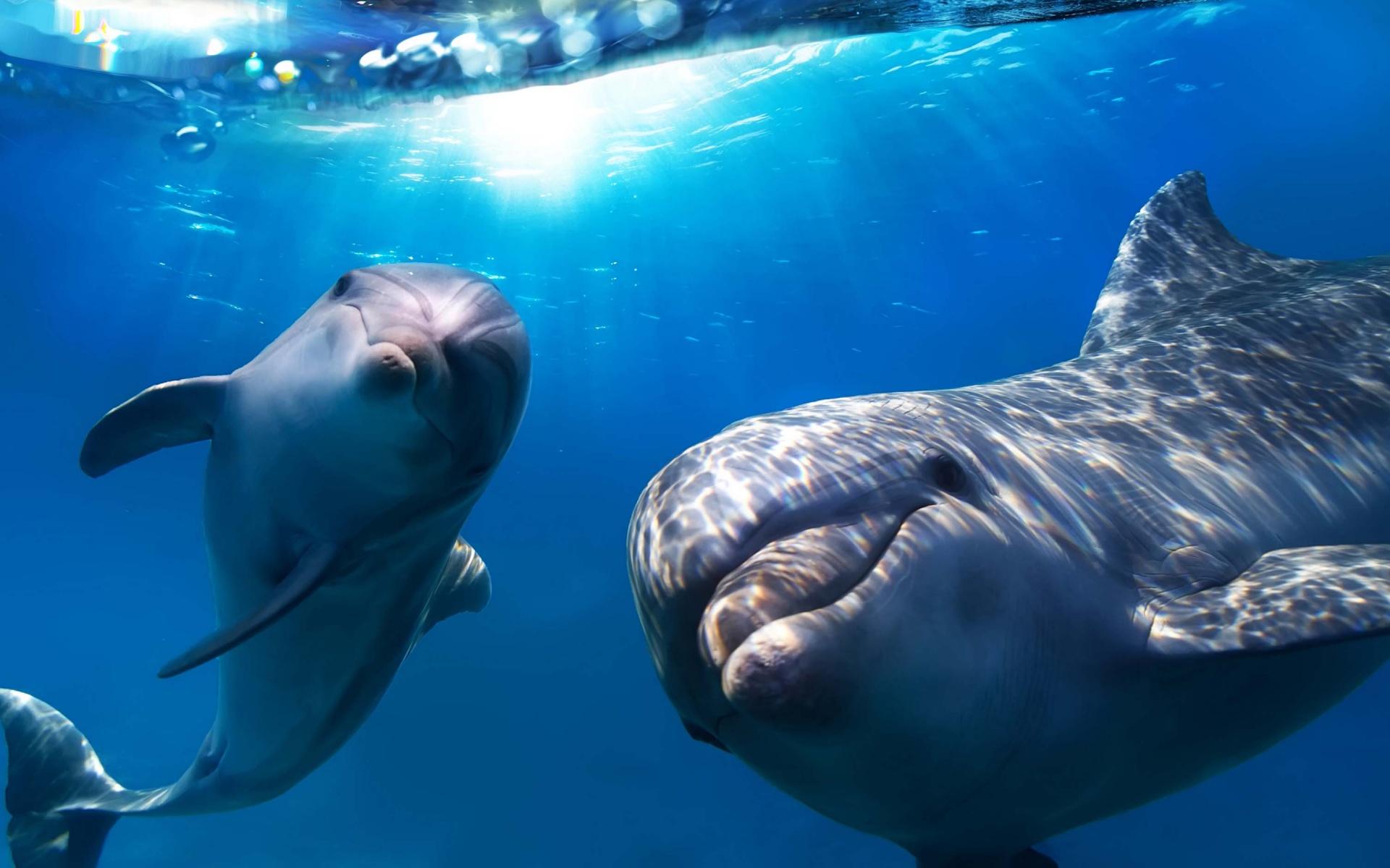 delfini-e-balene