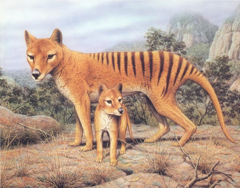 4-animali-estinti