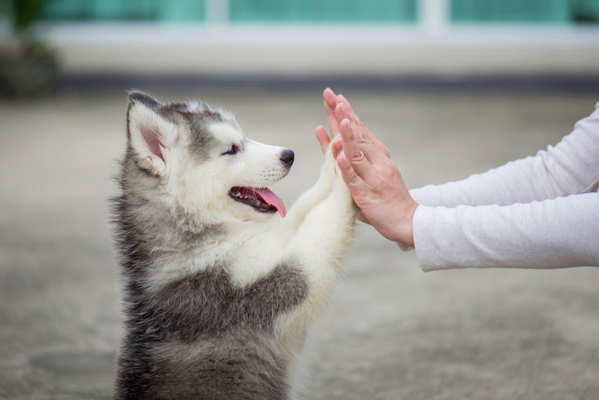 tradurre-il-linguaggio-dei-cani