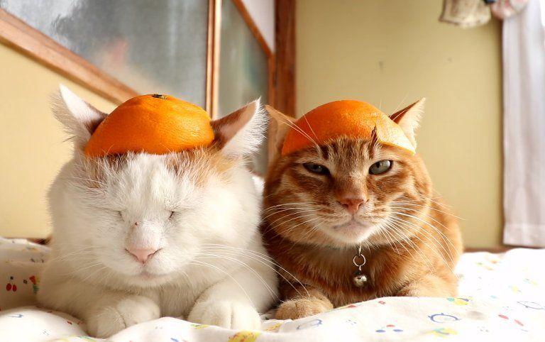 buccia-delle-arance