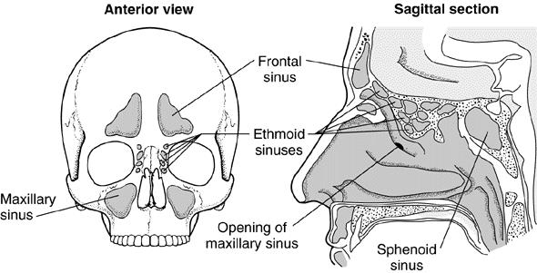 corpo-umano-in-evoluzione