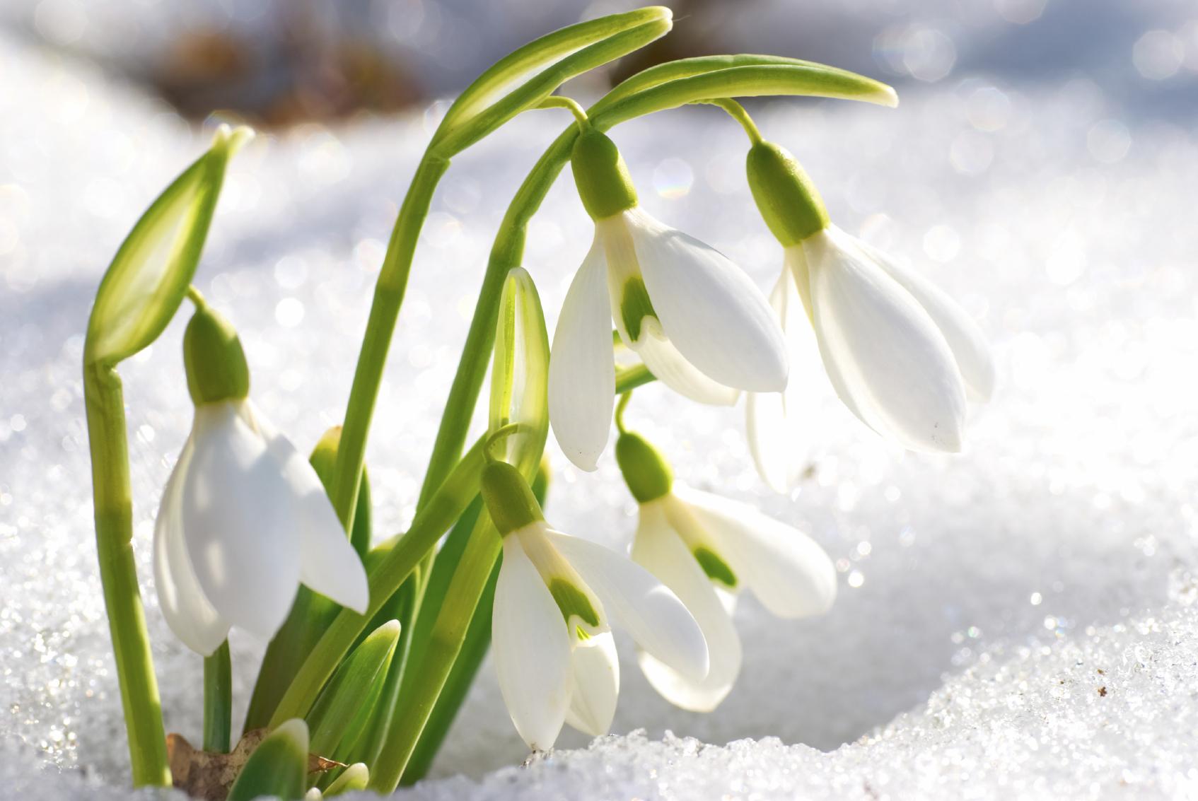 10-piante-invernali
