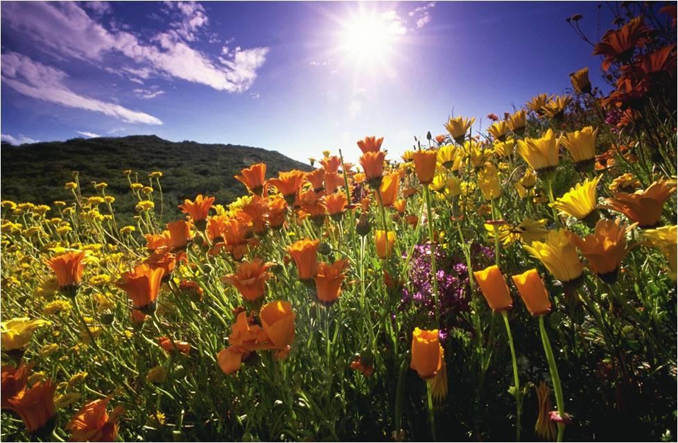 benefici-della-luce-solare