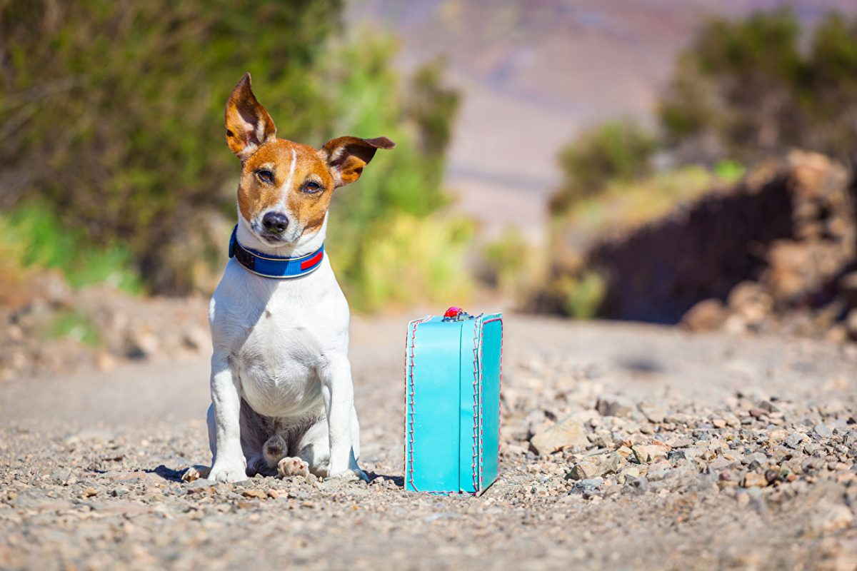 viaggio-con-animali