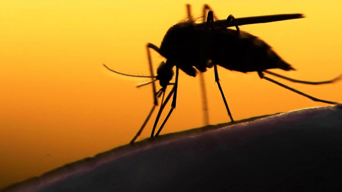 malaria-in-italia