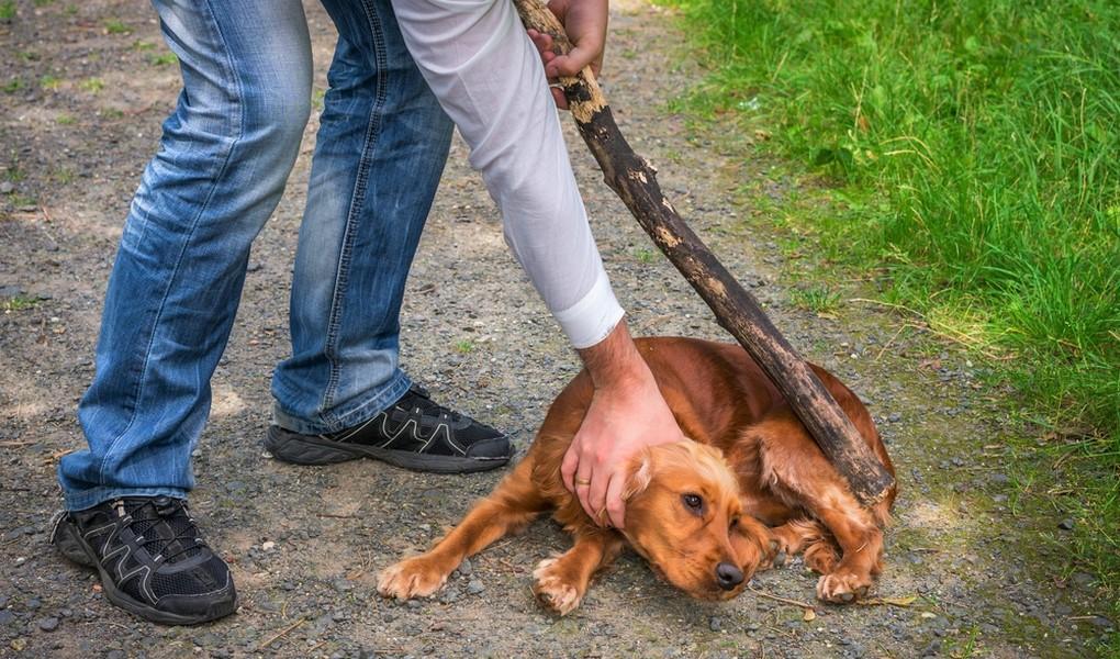 torturare-gli-animali