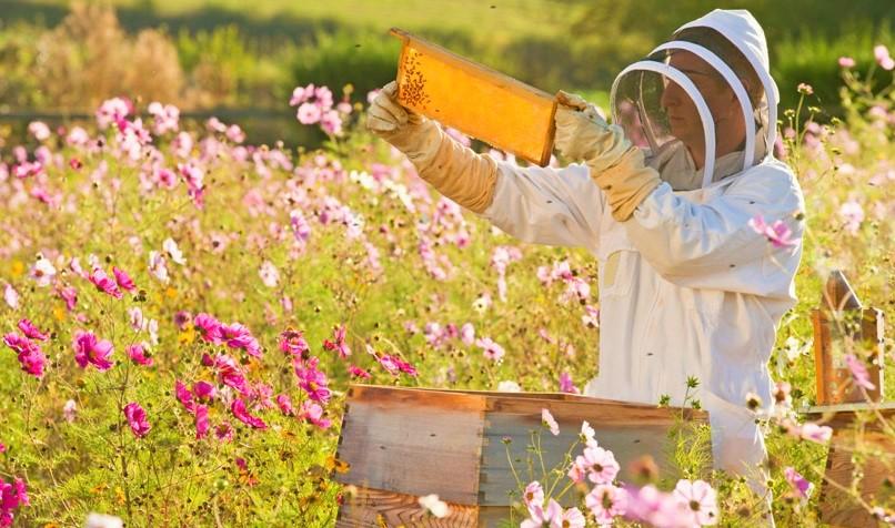 apicoltura-anticancro