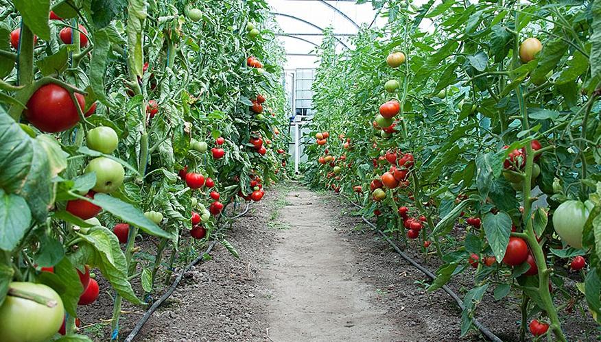 rimuovere-pesticidi