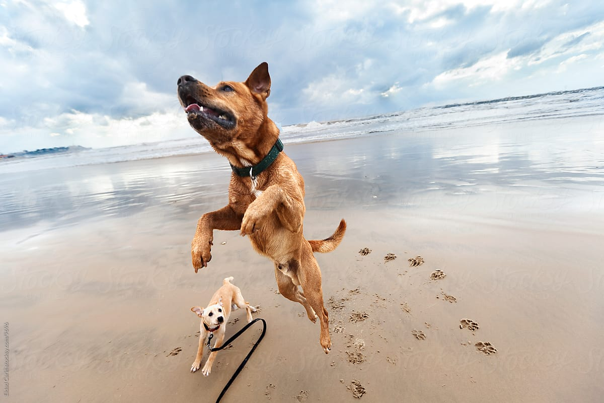 cani-meglio-delle-persone