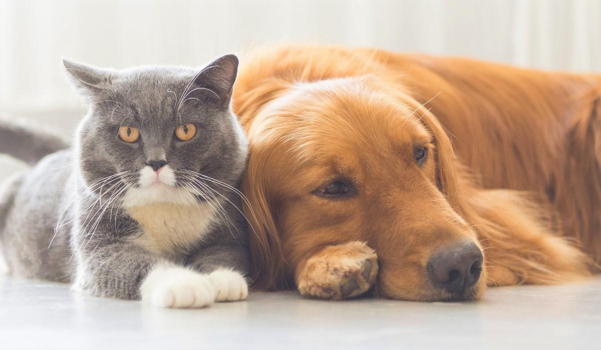 miti-da-sfatare-sui-nostri-animali-domestici