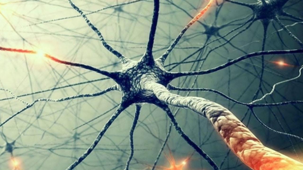 cervello-riattivato-dopo-la-morte