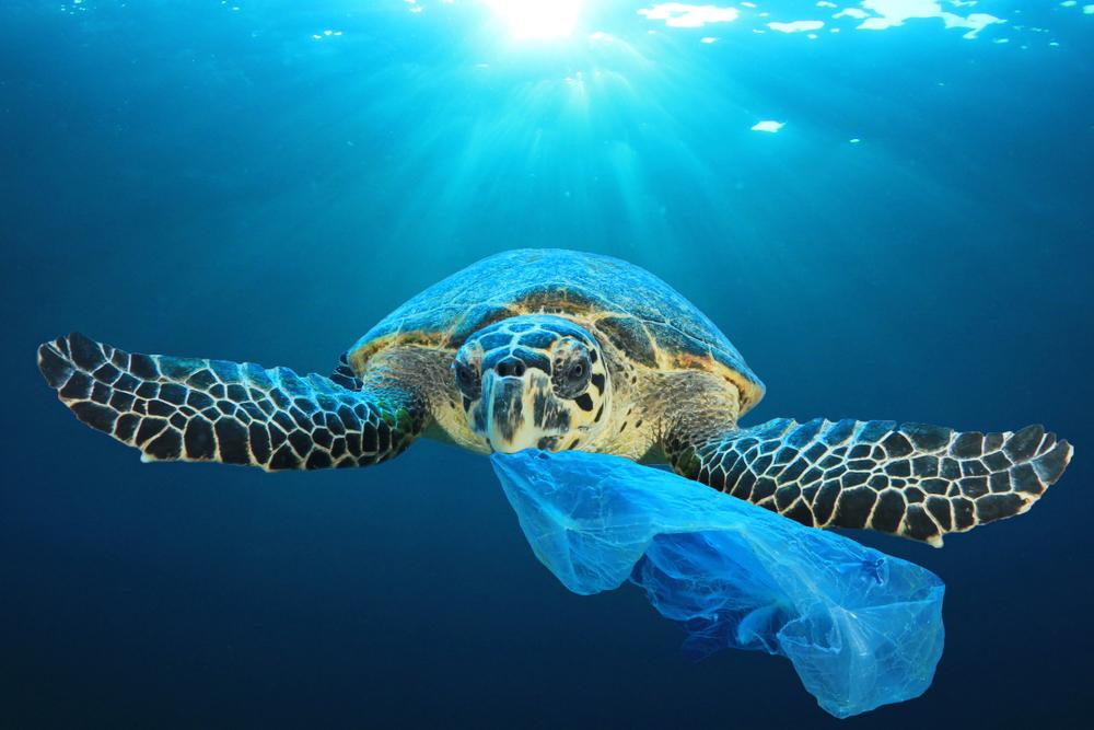 inquinamento-da-plastica