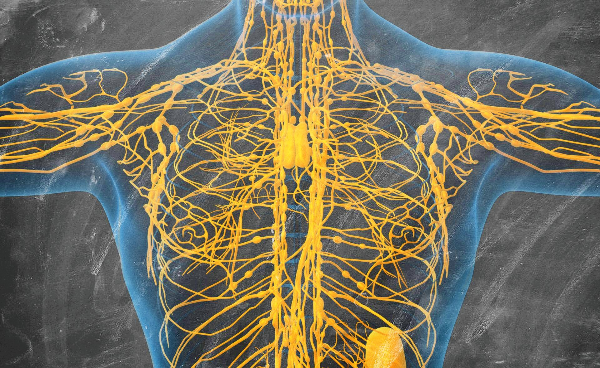 disintossicare-il-sistema-linfatico