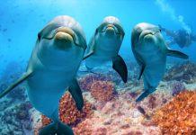 delfini-lasciano-doni-sulle-spiagge