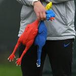 Inghilterra allenamento polli Soutghate, [GALLERY] – La nazionale Inglese si allena con i polli