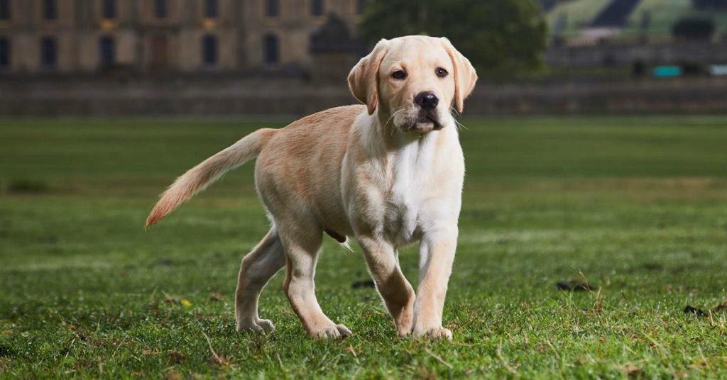 pulci, Il tuo cane ha le pulci? Ecco come riconoscerle e cosa fare