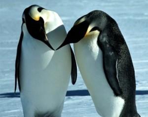 Pinguini - www.meteoweb.eu