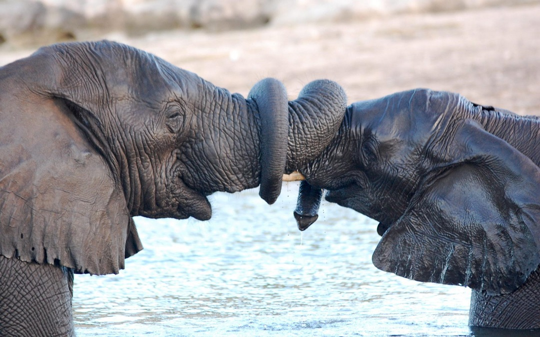 copertina tradimenti animali - www.alcalife.it