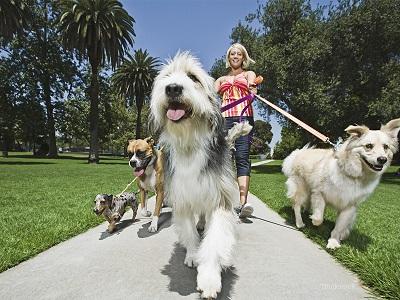 dog sitter - www.ilgiornale.it