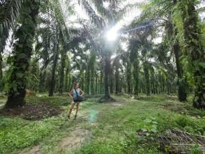 tessa gelisio piantagioni palma