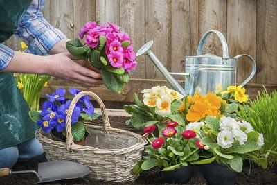 giardinaggio - non sprecare
