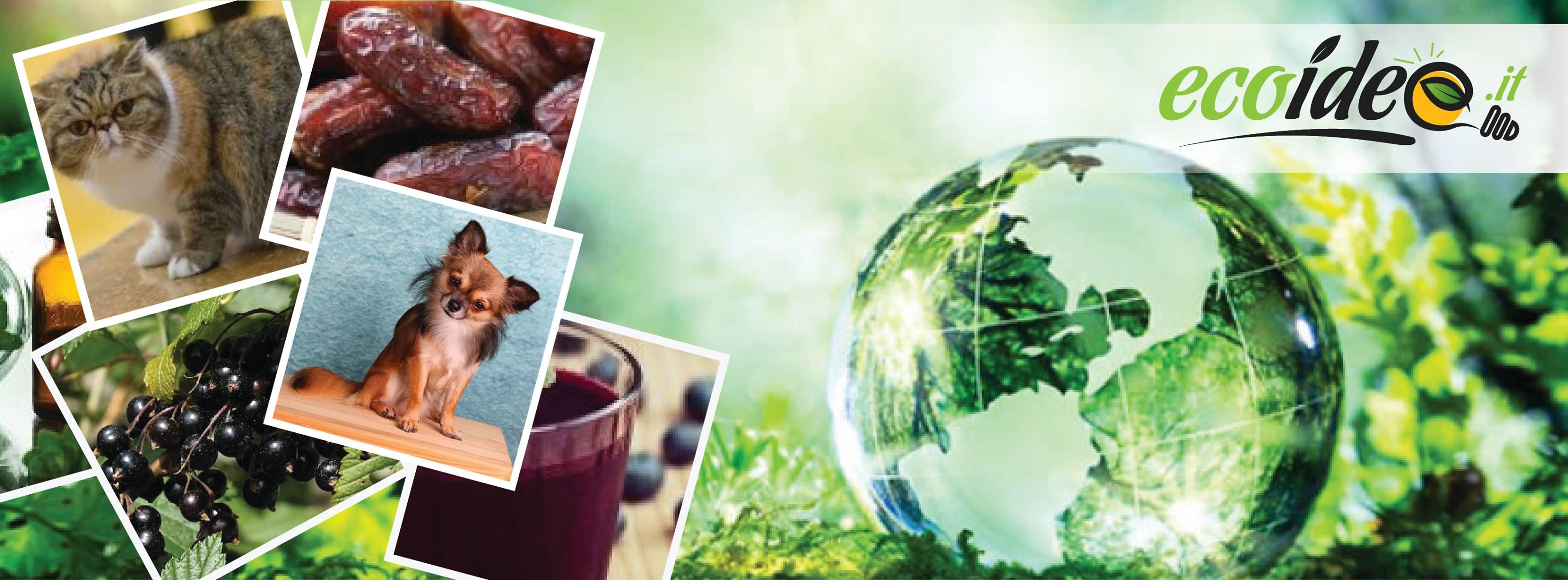 ecoidee - foto del portale su eco-notizie
