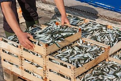 Pesce e sostenibilità