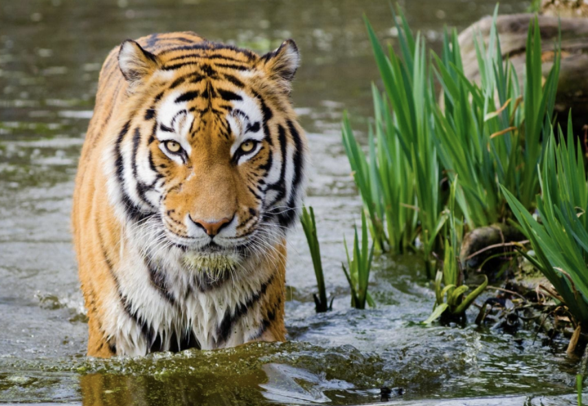 Biodiversità, come il Covid-19 ha danneggiato la conservazione