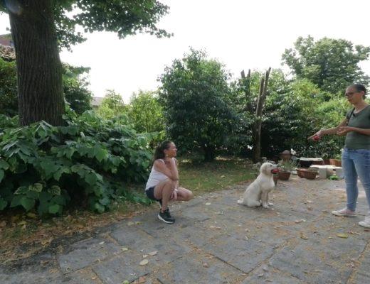 Dog training gestione degli oggetti