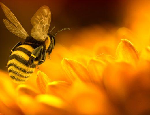 Ape, panno in cera d'api