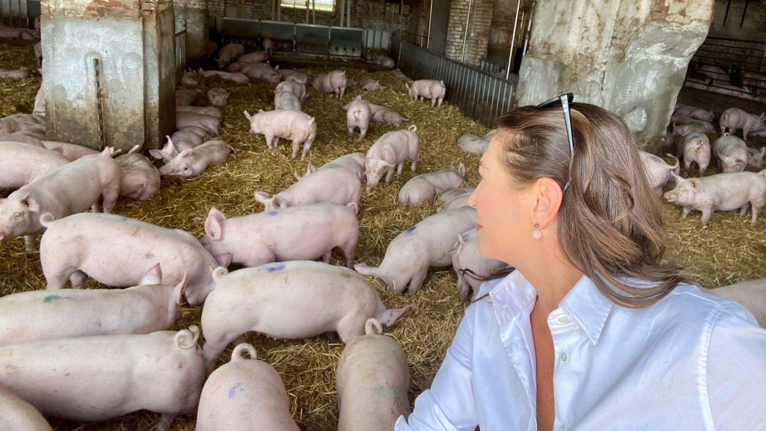 Benessere Animale: l'esempio virtuoso della filiera Fumagalli