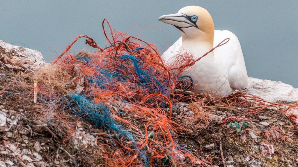 Reti da pesca in plastica