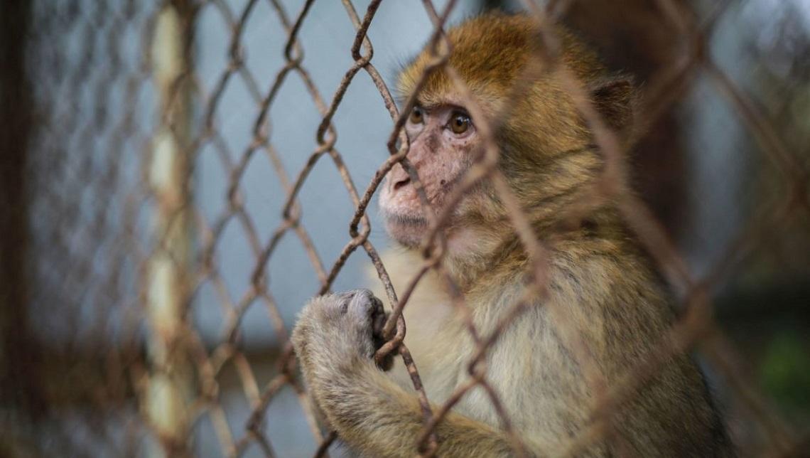 leggi-a-protezione-degli-animali