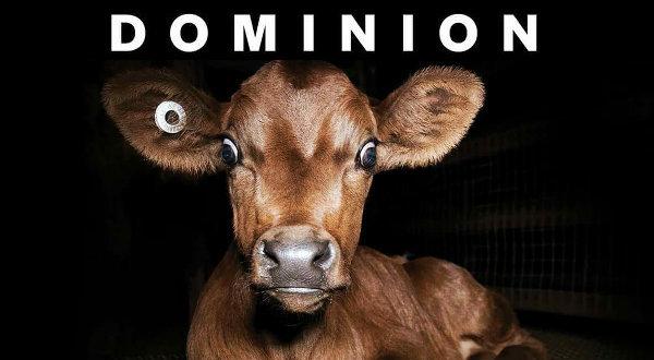 dominion-vitello