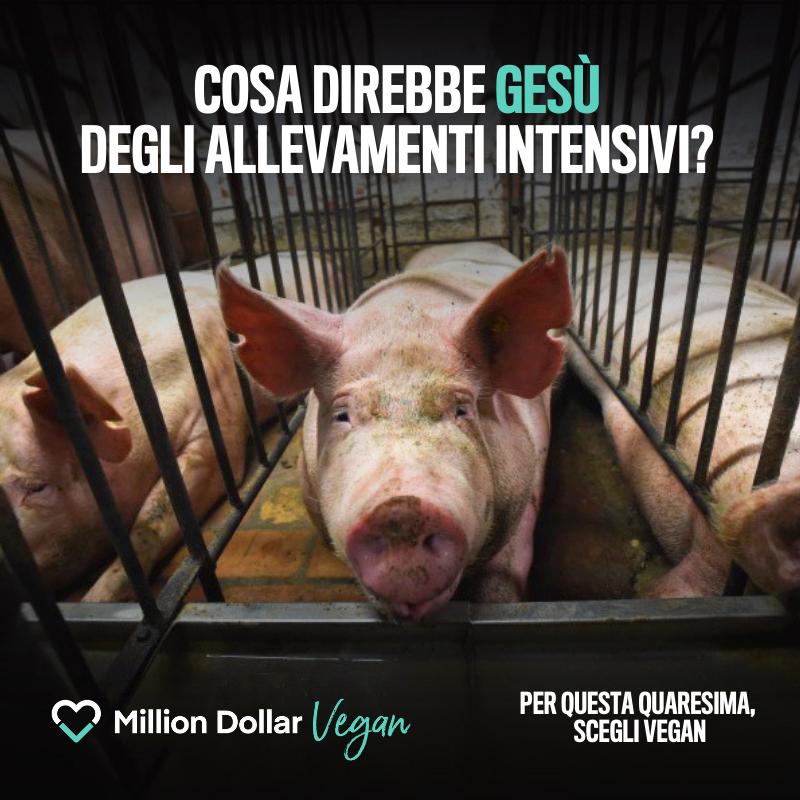 million-dollar-vegan