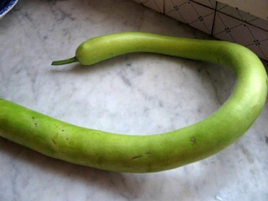zucca-serpente
