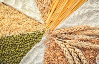 B12. I cereali fermentati con Propionibacterium freudenreichii la contengono: la nuova tesi dell'Università di Helsinki