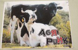 Agripunk: il rifugio per animali salvati dalla violenza e per uomini liberi