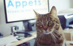 Appets, il primo social network dedicato interamente agli animali