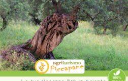 Agriturismo Piccapane: vacanze ecosostenibili, biologiche e vegan al 100% in Salento