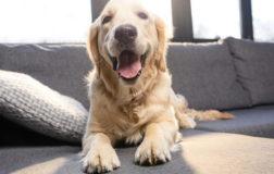 La Giornata Mondiale del Cane, si celebra oggi 26 agosto