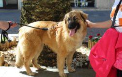 ThinkDog e Angelo Vaira lanciano la campagna natalizia a favore delle adozioni consapevoli dei cani