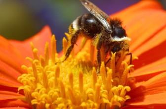 Perchè i vegani non mangiano il miele? Ecco le alternative.