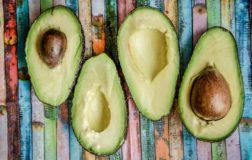 Rebel Avocado – Avocadeto sostenibile, nasce il rewad-crowfunding per coltivare in Italia il frutto più amato nel mondo