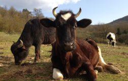 SOS Agripunk: come sostenere il rifugio per gli animali liberati