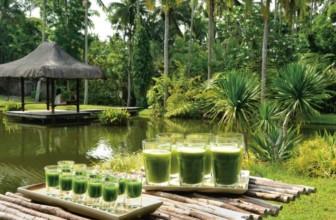 Veggie Hotels: the Joy of Vegetarian Vacations: nasce la nuova guida vegan-friendly.