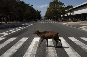 La prossima pandemia potrebbe essere l'ultima – Franco Libero Manco spiega perché la carne è causa primaria