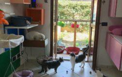 Il Grand Hotel di Mamma Carota e Miciopapà: una meravigliosa realtà dove i gatti salvati dalla strada vivono finalmente da principi