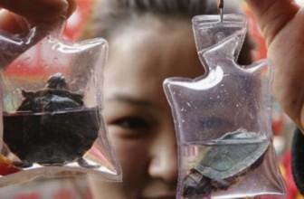 In Cina animali vivi vengono intrappolati in piccoli portachiavi di plastica e venduti come gioielli
